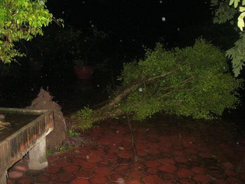 Toàn cảnh siêu bão Haiyan qua ảnh - 16
