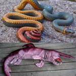 Phi thường - kỳ quặc - Những động vật biến dạng kỳ quái