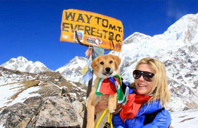 Chú chó đầu tiên chinh phục núi Everest - 2