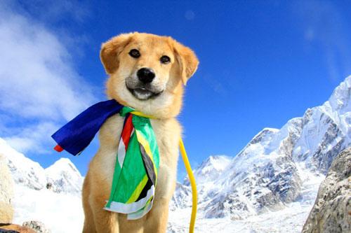 Chú chó đầu tiên chinh phục núi Everest - 1