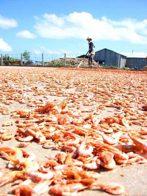 Cận cảnh quy trình làm tôm khô đặc sản miền Tây - 3
