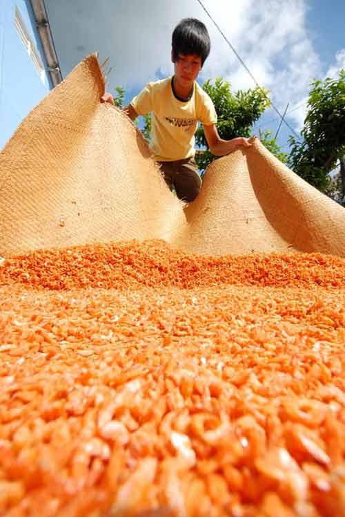 Cận cảnh quy trình làm tôm khô đặc sản miền Tây - 6