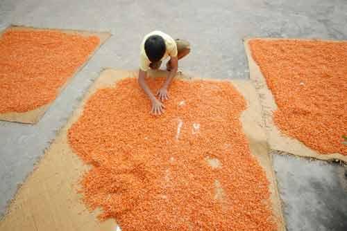Cận cảnh quy trình làm tôm khô đặc sản miền Tây - 7