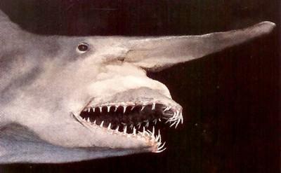 10 'sát thủ đại dương' kỳ quái nhất - 10