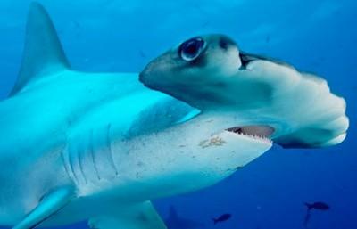 10 'sát thủ đại dương' kỳ quái nhất - 9