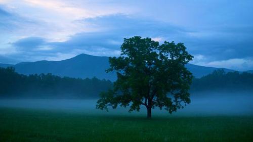 Vẻ đẹp hoang dại của dãy núi Great Smoky - 1