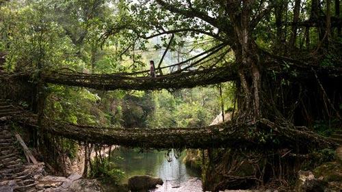 Những cây cầu đẹp lạ trên thế giới - 3