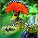 Phi thường - kỳ quặc - Phát hiện 24 loài sinh động vật kỳ lạ
