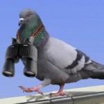 Phi thường - kỳ quặc - Oái oăm 10 câu chuyện vật nuôi bị bắt