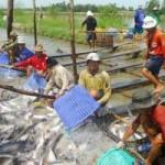 Thị trường - Tiêu dùng - 2014: Tôm vẫn là thủy sản xuất khẩu chủ lực