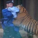 Tin tức trong ngày - Úc: Thoát chết thần kỳ sau khi bị hổ cắn vào cổ