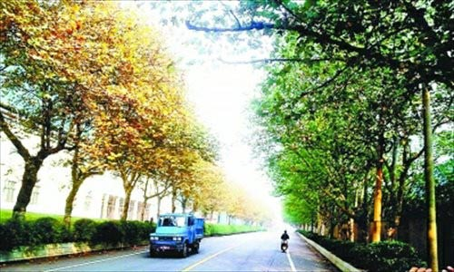 Hàng cây hai mùa kỳ lạ ở Trung Quốc - 1