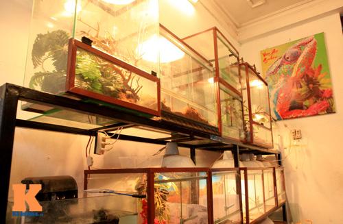 Những chú ếch trị giá tiền triệu của teen Việt - 1