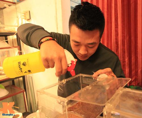 Những chú ếch trị giá tiền triệu của teen Việt - 7