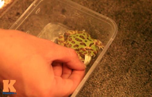 Những chú ếch trị giá tiền triệu của teen Việt - 5