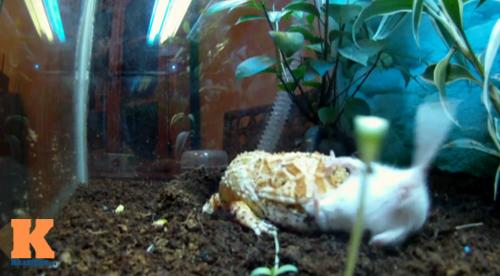 Những chú ếch trị giá tiền triệu của teen Việt - 6