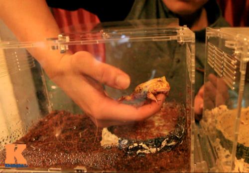 Những chú ếch trị giá tiền triệu của teen Việt - 10