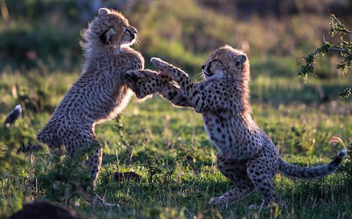 Ảnh đẹp: Khỉ sóc trao nhau nụ hôn nồng nàn - 1