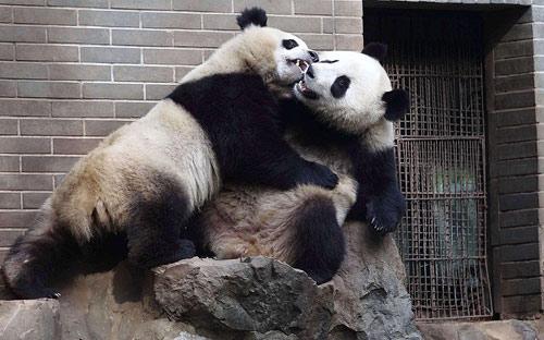 Ảnh đẹp: Khỉ sóc trao nhau nụ hôn nồng nàn - 7