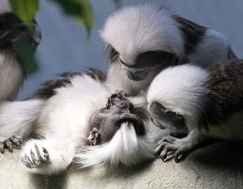 Ảnh đẹp: Khỉ sóc trao nhau nụ hôn nồng nàn - 8