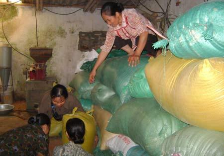 Miền Bắc: Mừng - lo xuất gạo sang Trung Quốc - 1