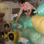 Thị trường - Tiêu dùng - Miền Bắc: Mừng - lo xuất gạo sang Trung Quốc
