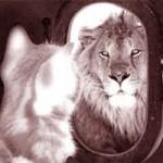 """Cười 24H - Thơ tặng """"sư tử Hà Đông"""""""
