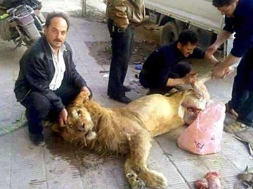 Người Syria xẻ thịt sư tử sở thú ăn chống đói? - 1