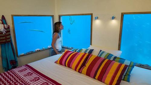 Ngủ với cá ở khách sạn dưới lòng đại dương - 5