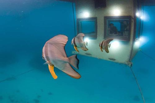 Ngủ với cá ở khách sạn dưới lòng đại dương - 6