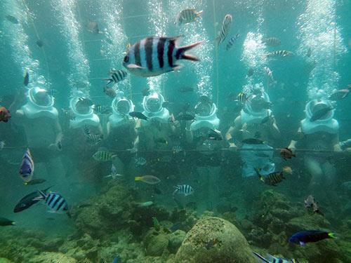 Thử cảm giác đi bộ dưới đáy biển ở đảo Sapi - 11