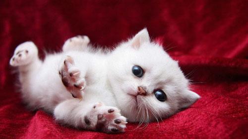 15 điều ít biết về loài mèo - 1