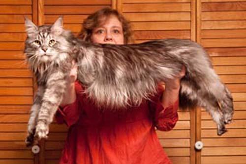15 điều ít biết về loài mèo - 4
