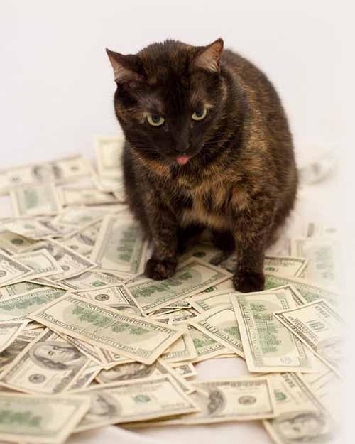15 điều ít biết về loài mèo - 3