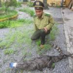 Tin tức trong ngày - Cá sấu nặng 24 kg rơi giữa Quốc lộ 1A