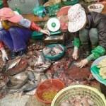 Sức khỏe đời sống - Hãi hùng chợ đầu mối cá, thịt rẻ ở Hà Nội