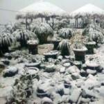Tin tức trong ngày - Sa Pa lạnh 2 độ, tuyết phủ trắng đường