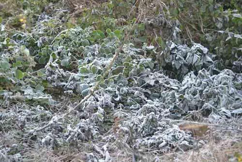 Ảnh: Tuyết vừa dứt, sương muối tấn công Lào Cai - 2