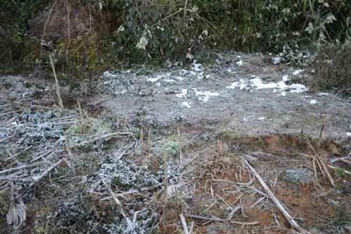 Ảnh: Tuyết vừa dứt, sương muối tấn công Lào Cai - 6