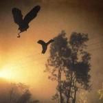 Phi thường - kỳ quặc - Thung lũng chim tự sát ở Ấn Độ