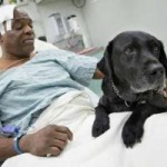 Tin tức trong ngày - Chó nhảy xuống đường ray cứu người chủ mù