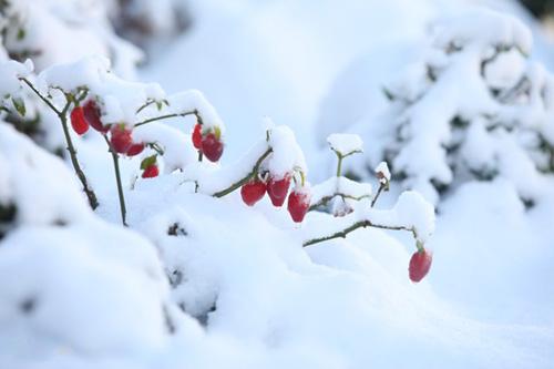 Những hình ảnh đẹp nhất về Sapa mùa tuyết rơi - 11