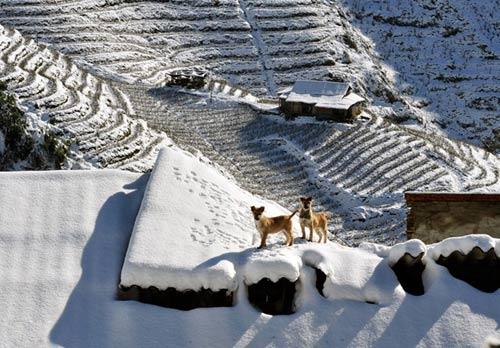 Những hình ảnh đẹp nhất về Sapa mùa tuyết rơi - 3