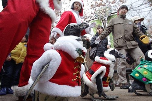 """Video: Chim cánh cụt hoá ông già Noel """"lạch bạch"""" - 2"""