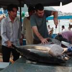 Thị trường - Tiêu dùng - Xuất khẩu cá ngừ tăng trưởng... âm