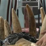 An ninh Xã hội - Bắt 200 kg ngà voi tại sân bay Nội Bài