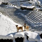 Du lịch - Những hình ảnh đẹp nhất về Sapa mùa tuyết rơi