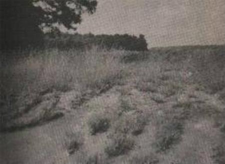 Thảm án trên cánh đồng hoang (Kỳ 1) - 1