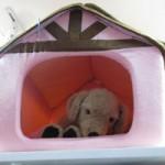 Thị trường - Tiêu dùng - Chi tiền triệu sắm đồ tránh rét cho thú cưng