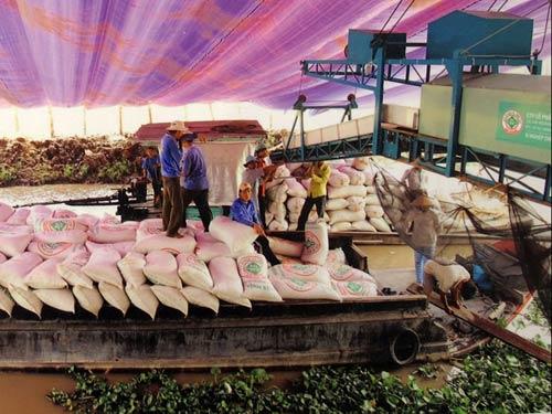 Xuất khẩu gạo: Tính hoài vẫn hẹp cửa ra - 1